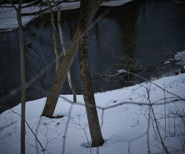 with trees, by the river at dusk,  2-22-20 2