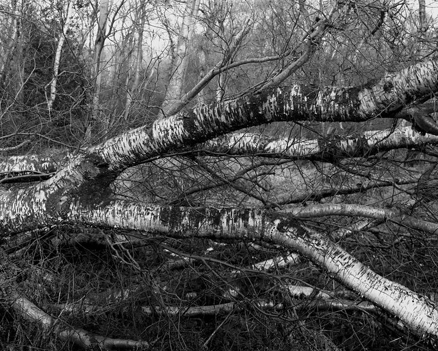 Hyons Wood, Walker Titan SF with Nikkor 90mm, Ilford Delta 100 in HC110