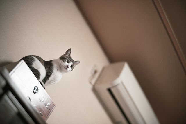 Cats always want to climb up to high places.