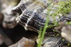 Strips.. Mushroom