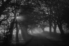 A misty morning in a Cheshire lane.