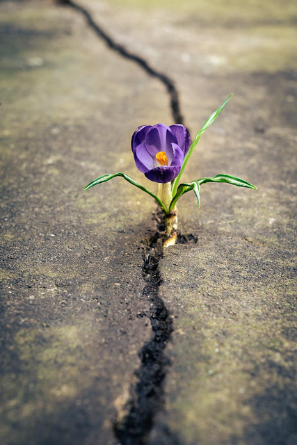 new life from the cracks