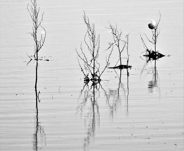 Druridge Pond - Reflections on Vegetation