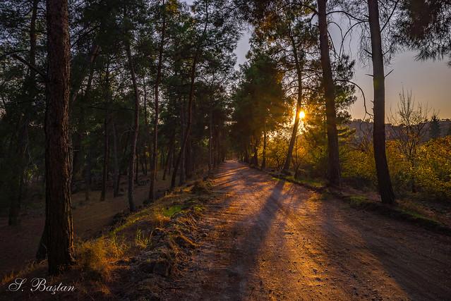 Bazıları güneşin bazıları gecenin peşine düşer. (Some chases Sun, some chases night.)