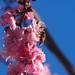 Blossom 11