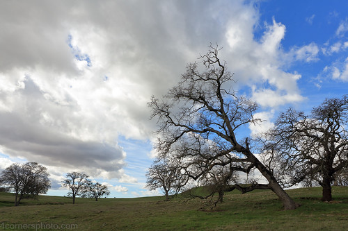 calaverascounty california centralvalley clouds cow hill landscape motherlode nature northamerica oak outdoor pasture sanjoaquinvalley sky tree unitedstates valleyoak weather winter valleysprings