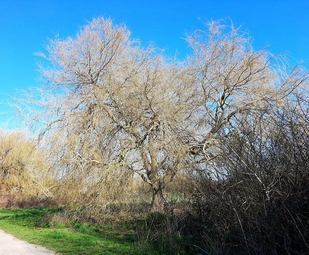 Alver Nature Reserve