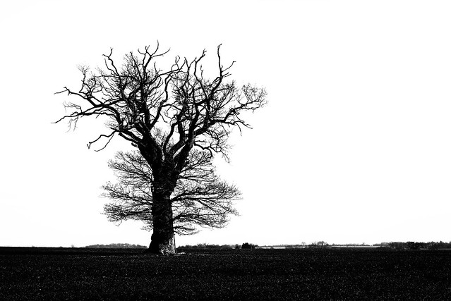 Standing in a field alone