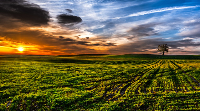 Crops at sunset