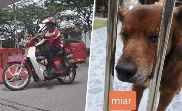 Isu Posmen Lastik Anjing, Shahrol Shiro Bongkar Abang Posmen & Pemilik Anjing Berdamai
