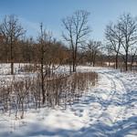 Oak Openings and Barrens