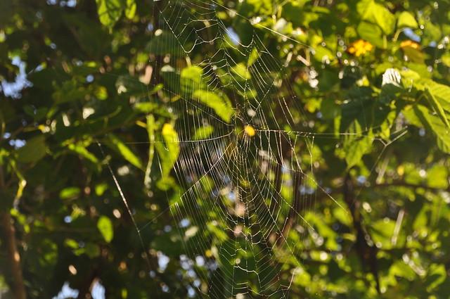8986 Web against a tree DSC_0006
