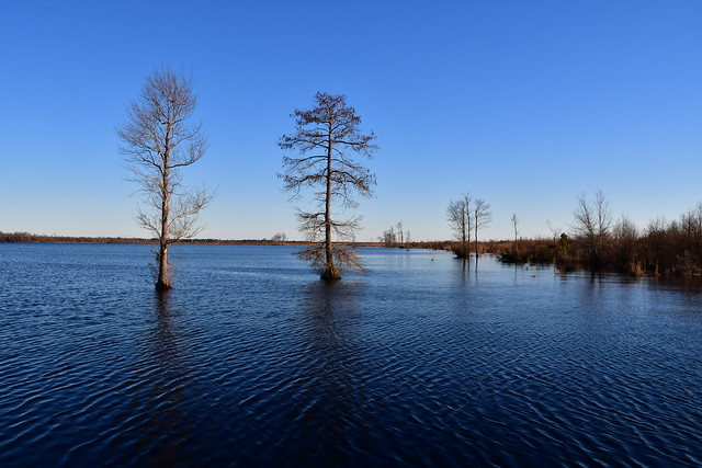 Great Dismal Swamp | 21.02.16 | DSC_5549