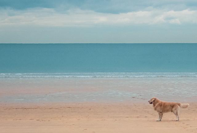 The dog & The Beach.