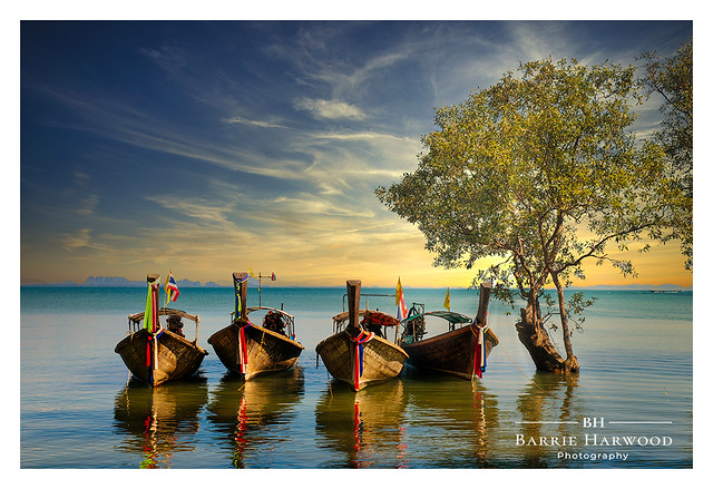 Long-tail boats next to a Mangrove in Krabi, Thailand