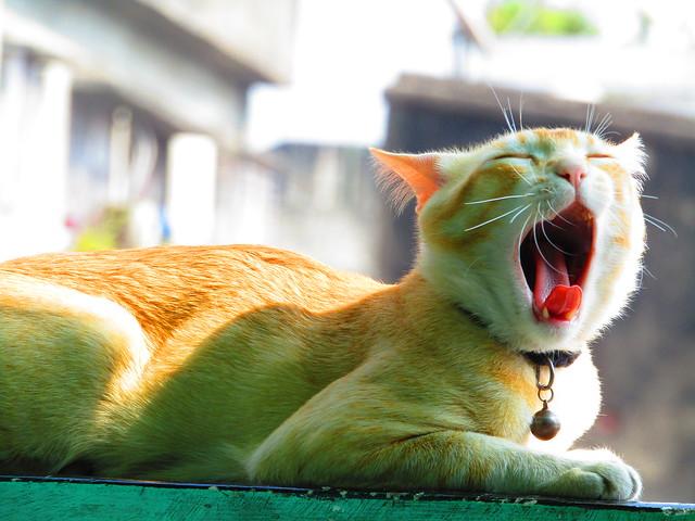 MINI_THE_CAT