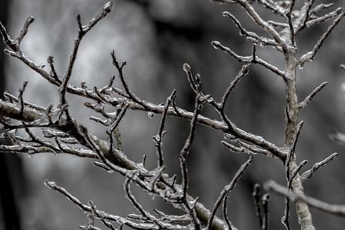 Frozen Branches 2 - EXPLORE February 28, 2021