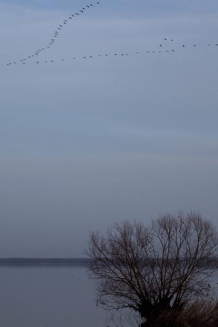 migration des grues, Lac du Der