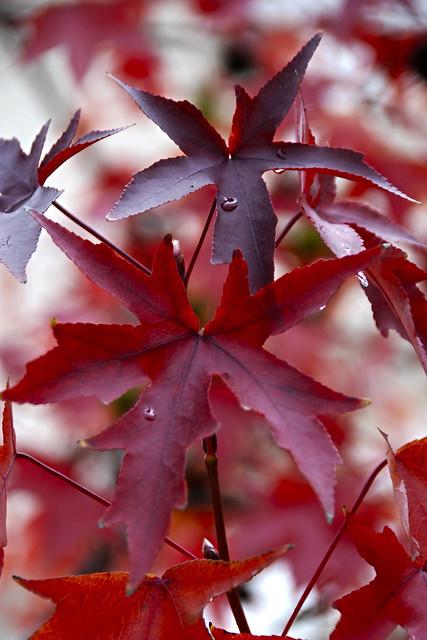 Últimas gotas de otoño