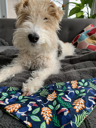 Piper's new bandana