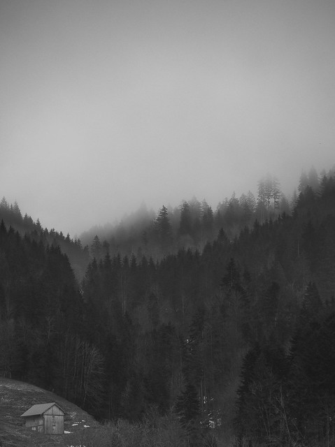 foggy forest b&w