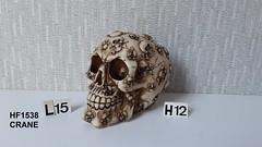 F HF1538