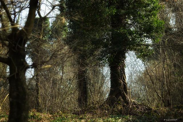 Rinascita della primavera tra la foresta