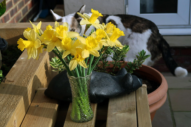 Daffodils and Dog