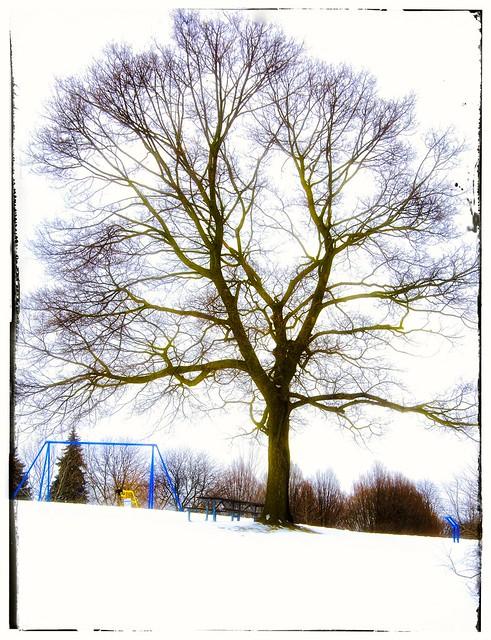 Nature's Playground - HSS