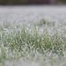 Nice frost; didn't last longNice frost; didn't last longSat 27 Feb 21: we're into that time of...