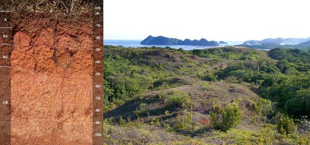 Ngardmau soil and landscape
