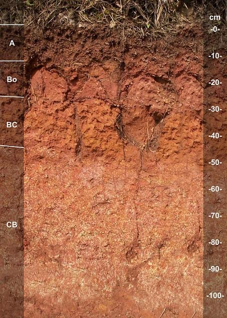 Ngardmau soil series