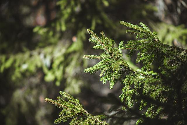 Skogen till liv vakna.