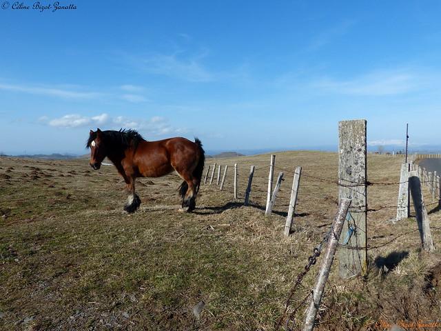 Bienvenue, sur les très hauts plateaux sauvage du haut Cantal - Cantal - Auvergne - France - Europe