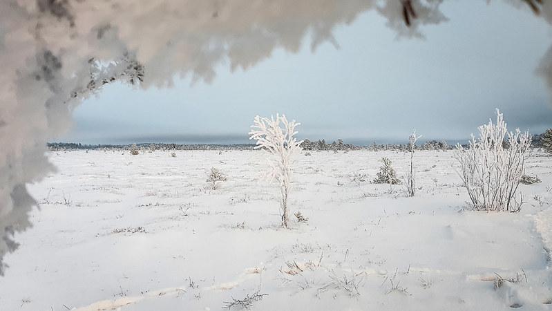 Torronsuon kansallispuisto talvella