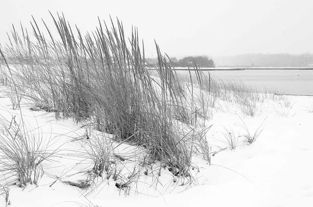 Winter Dune Grass