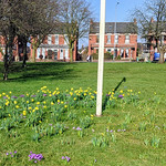 Early Spring flower display at Ashton Park, Preston