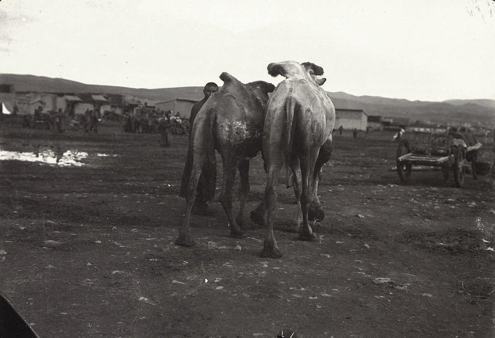 Верблюды и их возчики на Ургинском базаре. Урга