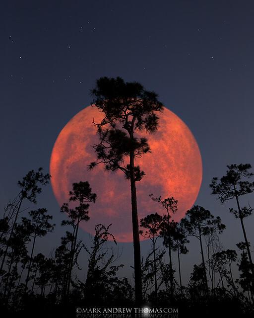Everglades Planet