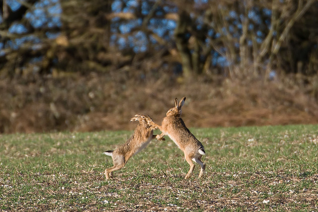 New Hare Alley260221_41.jpg