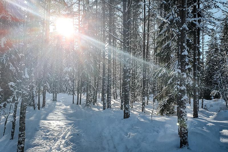 Kurjenrahkan kansallispuisto talvella