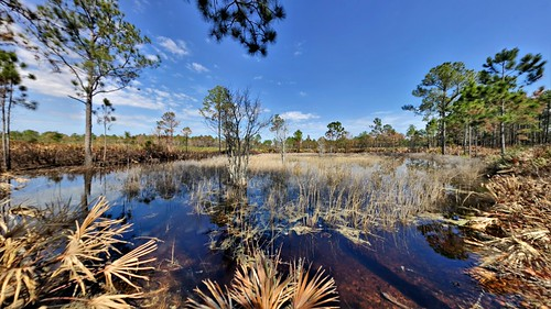 duval jacksonville fl florida walk hile trail landscape travel statepark pano panorama