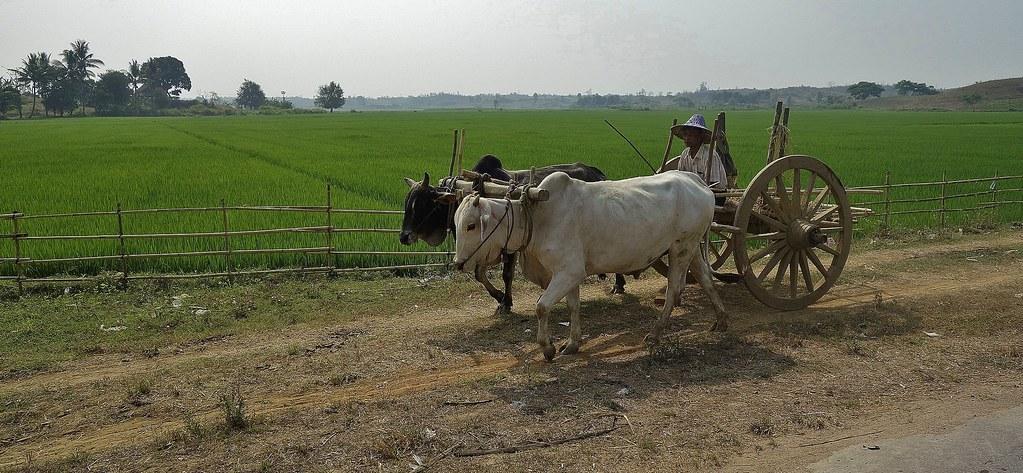 MYANMAR ,Burma - Unterwegs nach Bagan,am Rande der Hauptstadt - Gegensätze , man glaubt es kaum, 78204/13430