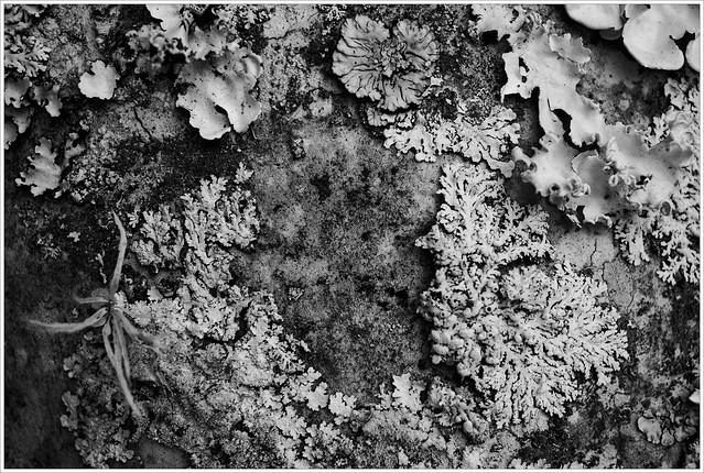 licheness