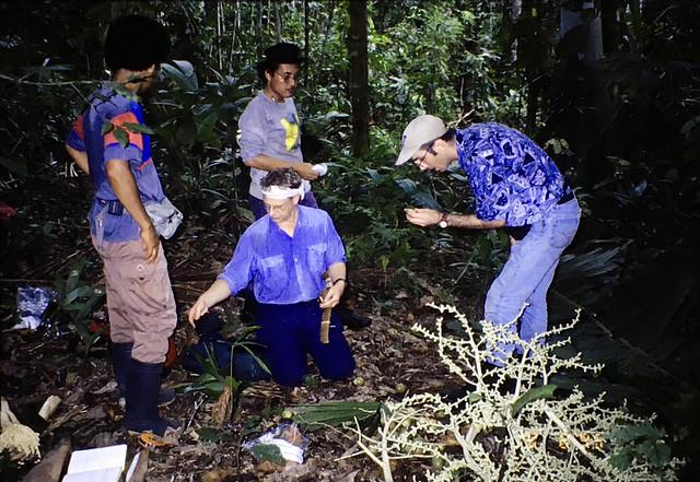 SZ collecting Ptychococcus