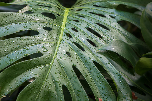 The Exotic Leaf