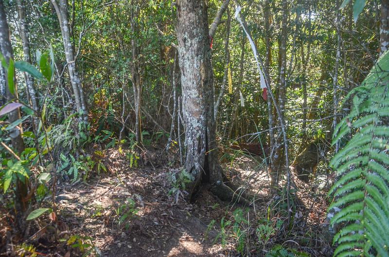 百川山溪稜雜林路段