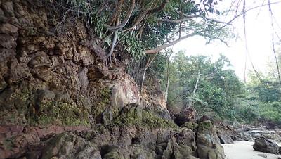 Coastal forest of Lazarus Island, Feb 2021