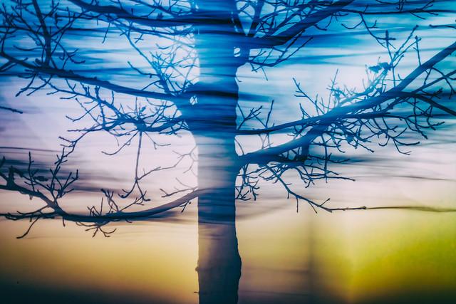 Tree ICM