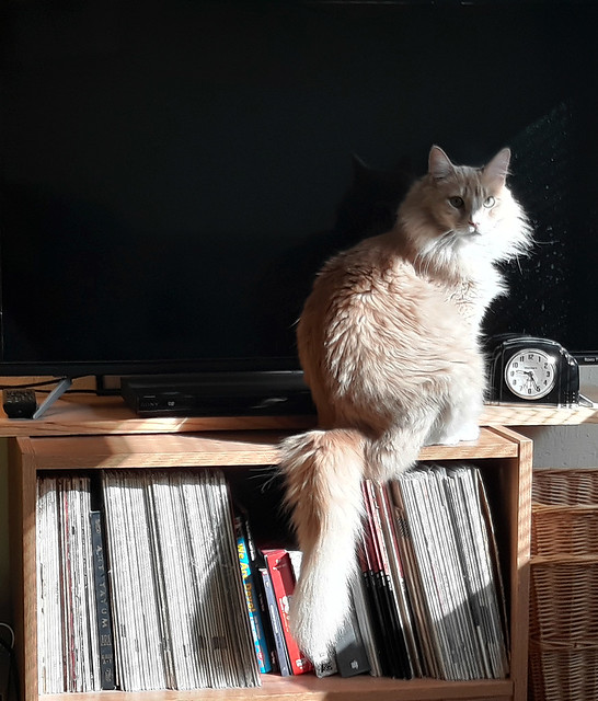 Cat Morning Sun